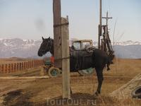 В последний момент этот конь зашел за столб.