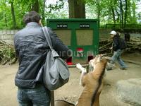 Зоопарк. Конечно, там не только козы... Но их, и кое-каких еще  животных можно (и нужно) кормить самим