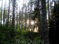 валаамский лес