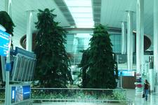 один из уголков живой природы под сводами здания аэровокзала