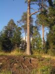 лес Валаама