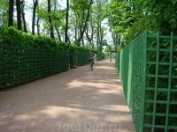 За время реконструкции,  которая началась в 2009 году, из сада исчезли больные деревья, были высажены липы и кустарники, воссоздан облик центральных парадных ...