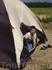 Испытание Палатки