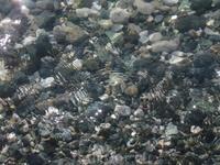Чистейшая вода в Пицунде