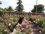 Волшебный запах роз