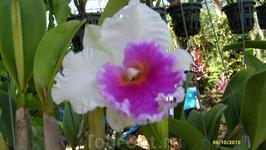 в парке орхидей