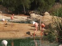 фламинго- парк Фригуа