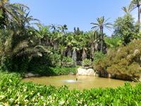 """Парк El Palmeral находится в зоне """"Большого Аликанте"""", в городке Elche, в котором находится также и аэропорт."""
