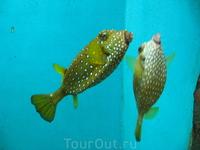 аквариум в эль-гуне