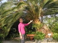 """Вот такие пальмы выращивают в Петербурге! В """"Пальмовой оранжерее"""" Таврического дворца"""