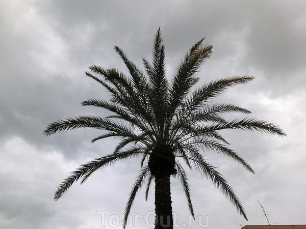 А в день прилета меня ждала вот такая погода - дождь, временами переходящий в ливень, тучи и ветер.