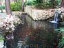 Красные рыбки в пруду городского парка