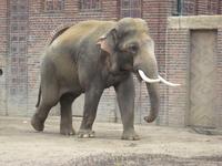 Слоны всегда собирают зрителей, которые с удовольствием наблюдают за их общением. Зрелище и правда интересное)))