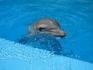 Дельфин из Аквалэнда.