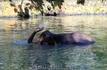 Слон для катания туристов в заповеднике