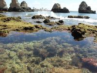 Podvodnii mir Atlantichescogo Okeana moimi glazami , Portimao
