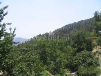 Знаменитые хвойные леса Кипра. Об этом нам поведал молдованин с папой - греком-киприотом. )