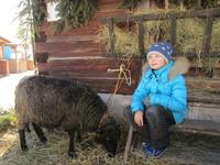 Живности в Словакии хватает: и оленей, и козочек, и овечек  видели и гладили море..