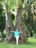 Удивительное дерево в парке Сочи