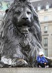 Один из знаменитых львов, отлитых из трофейных французских пушек и охраняющих пьедестал пятидесятиметровой Колонны Нельсона.
