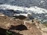 """Рига. Абсолютно беспардонная чайка. Сфотографирована с расстояния  50 см. Тем и вызывает """"возмущение"""" ;-)))"""