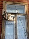 """А это """"чудо"""" заинтересовалось моим появлением во дворе дома и выглянуло в форточку познакомиться поближе :)"""
