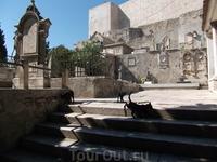Черные кошки. На кладбище Св. Анны