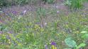 Травы,травы и цветы полевые
