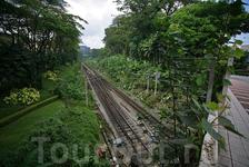 В тех местах (это все в быстрой пешей досягаемости от Чайнатауна) современный город граничит с джунглями парка. В одну сторону так.