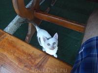 и еще одна болгарская  кыса в кафе ЭЛЛАДА
