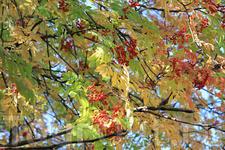 Иркутск. Осень