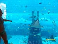 Аквапарк отеля Атлантис. Внутри аквариума отличный вид, когда плывёшь на круге, после спуска с горки.