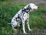 Забавный пёс носился по двору, без помощи хозяйки он никак не попадал в кадр :) А она нам рассказала, что у них в городе бродячих собак почти нет, т.к ...