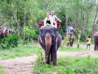 по джунглям на слонах