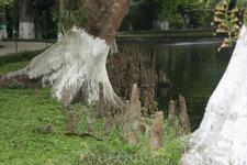 Торчащие из земли штуки - корни дерева, которое перед Вами.