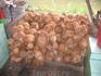 А Вы видели столько шкурок кокосов? )
