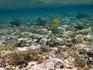 Красоты Красного моря-снорклинг