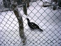Зоопарк Санта-Клауса, самый северный в мире