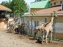 Красноярский парк флоры и фауны