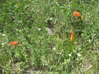 Прибайкальская растительность