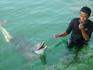 Дельфин- девочка Жасмин, Имя мальчика - утеряно для истории.