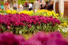 Цветы в парке Гюльхане