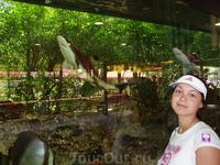 очень много аквариумов и там плавают интересные рыбки