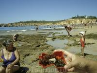 Praia de Vau, crasivaia nahodca (buziu)