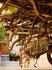 Успенский монастырь Св.Пальяни. Ветви миртового дерева. А зелени на них нет, т.к. люди его оборвали, чтобы веточки на память взять:(