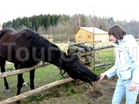 лошадки:)))