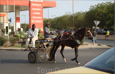гужевой транспорт Дакара