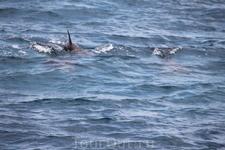 Дельфины не в дельфинарии