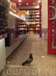 голубь-воришка :)