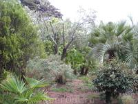 Оливки, пальмы... Вообще, лично я считаю, что с погодой во время посещения сада нам очень повезло. Пасмурное небо, висящие облака и ощущение влаги после ...
